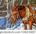 Horse cart running on snow road 53823887