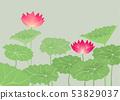 東方蓮花和蓮花葉子傳染媒介圖像 53829037