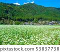 메밀의 꽃과 미야마 초가 마을 53837738
