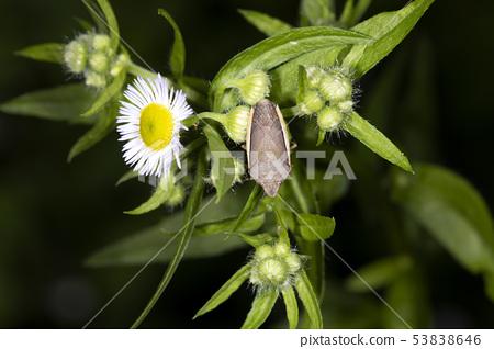 白翅蟲 53838646