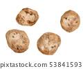 Solanum tuberosum 감자 53841593