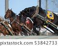帶廣賽馬場的Banei賽馬(北海道帶廣) 53842733
