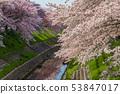 ดอกซากุระในนารา 53847017