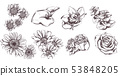 Vintage flowers set line art Vector. Sunflower, 53848205
