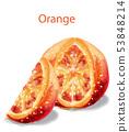 Orange slice fruits Vector watercolor illustration 53848214