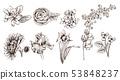 Vintage flowers set line art Vector. Sunflower, 53848237