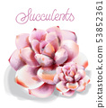 Succulent flower Vector watercolor isolated. 53852361