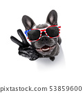 independence day 4th of july dog 53859600