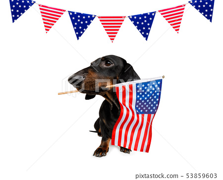 independence day 4th of july dog 53859603
