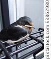燕子的築巢 53862980