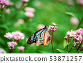 Blue butterfly perched on a flower 53871257