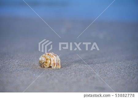 Close up of Shells on the beach 53882778