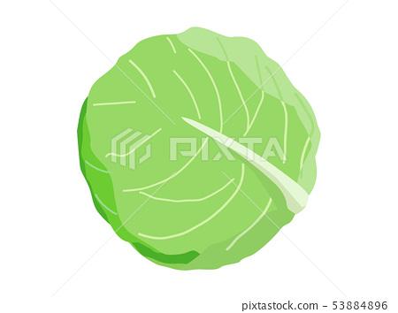 cabbage 53884896