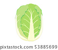 Chinese cabbage 53885699