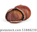 chestnut isolated on white background 53888239