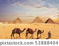 Camel caravan near the Great Pyramids of Giza in Egypt 53888404