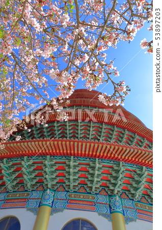 櫻花,天元宮,吉野櫻 53897203
