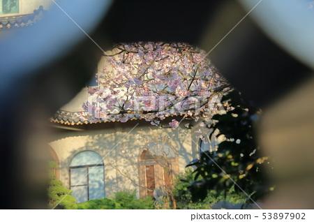 Cherry Blossom, Oriental Temple, Yoshino Sakura 53897902