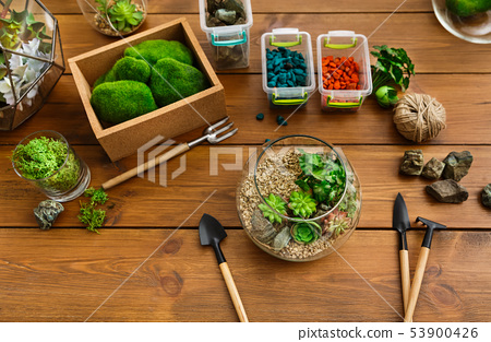 Florarium, plants, moss stones and tools on table 53900426
