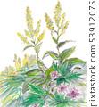 Flower field of Echigo Komagatake 53912075