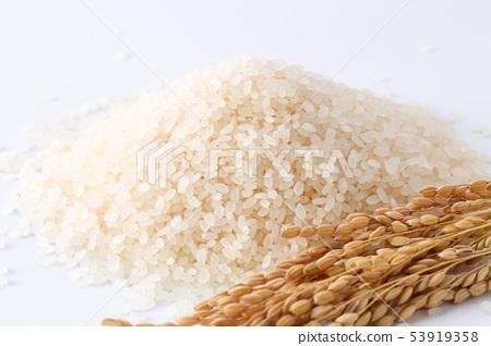 Rice 53919358