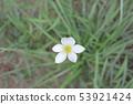beautiful flowering plants a Flowers of plants 53921424
