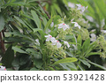 beautiful flowering plants a Flowers of plants 53921428