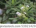 beautiful flowering plants a Flowers of plants 53921429