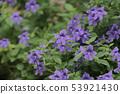 beautiful flowering plants a Flowers of plants 53921430