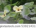 beautiful flowering plants a Flowers of plants 53921431