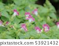 beautiful flowering plants a Flowers of plants 53921432