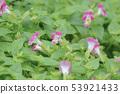 beautiful flowering plants a Flowers of plants 53921433