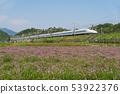 Lotus Flower and Tokaido Shinkansen 53922376