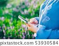 Hands of woman using smartphone in flowers field. Technology concept. 53930584