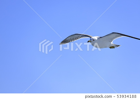 Seagull and blue sky 53934188