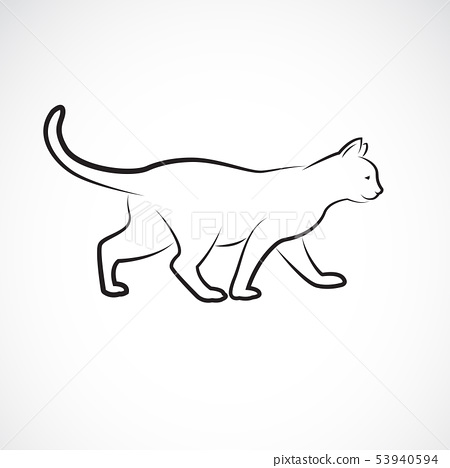 Vector of cat walking on a white background. Pet. 53940594