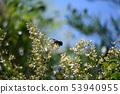 蜂和南部的天空花 53940955
