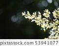 蜜蜂参观蜜蜂的活动 53941077