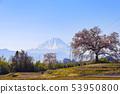 [เมืองอะมะงะซะกิจังหวัดยามานาชิ] ดอกซากุระและภูเขาไฟฟูจิในวาคาซูกะ 53950800