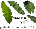 Tropical Banana Palm Leaves 53952235