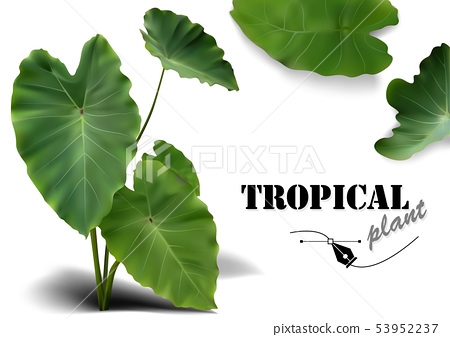 Tropical Leaves Set 53952237