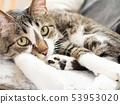 소파에 고양이 53953020