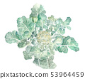 브로콜리 잎있는 물방울 수채화 53964459