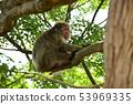 나무에 원숭이 53969335