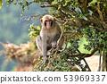 나무에 원숭이 53969337
