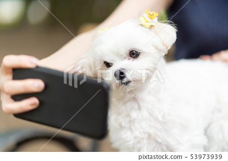 馬耳他寵物智能手機 53973939