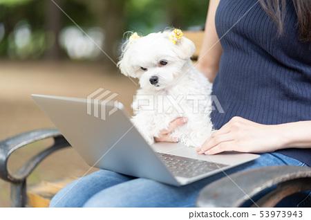 馬耳他寵物筆記本電腦 53973943