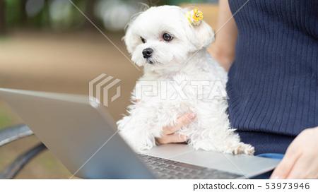 馬耳他寵物筆記本電腦 53973946