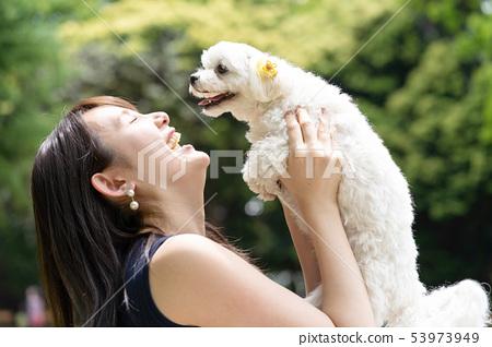 馬耳他寵物 53973949