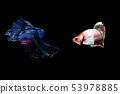 Fish 53978885